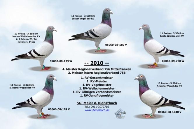 Meisterschaftstauben 2010 der SG Meier und Dienstbach